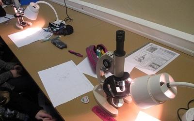 Sixième – Première utilisation des microscopes